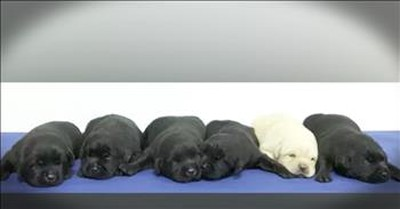 Sweet Police Photoshoot With Newest K9's
