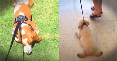 Funny Dogs Refuse To Come Inside