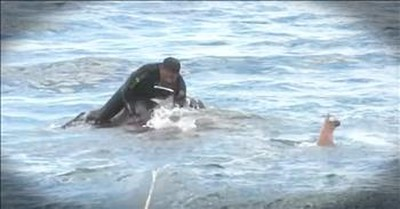 Navy Team Rescues Drowning Elephant