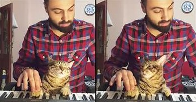Relaxed Cat Listens To Owner Play Piano