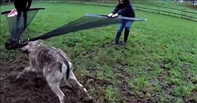 Rescuers Save Deer Trapped In Wire Fence