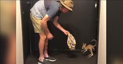 Baby Kangaroo Tries To Hop For First Time