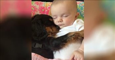 Baby And Puppy Take Sweet Nap Together