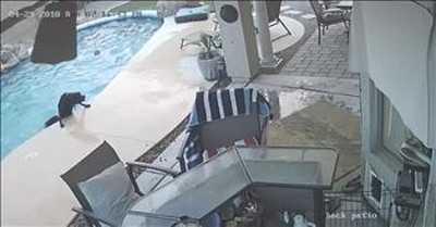 Security Camera Captures Dog Rescue In Pool