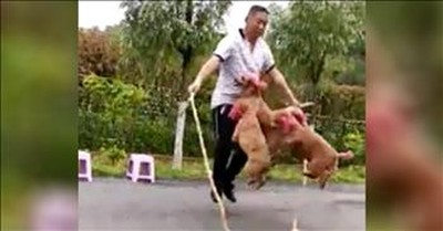 4 Dogs Jump Rope With Their Owner