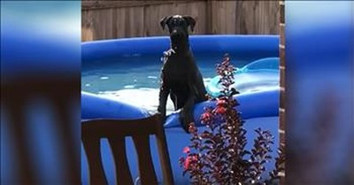Guilty Dog Caught Playing In The Pool