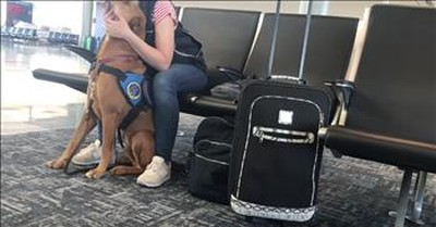 Hero Service Dog Helps Owner During Panic Attack At Airport