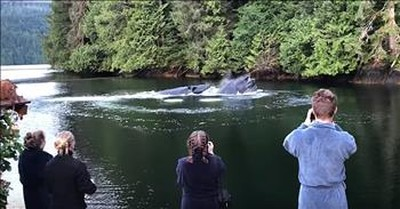 Humpback Whales Crash Breakfast At Lodge