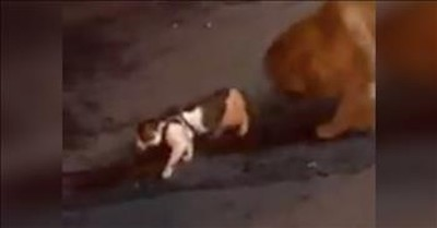 Dog Stops Cat From Getting In A Fight