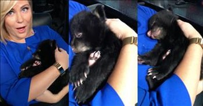 Reporter Rocks Rescued Bear Cub To Sleep And His Reaction Is Priceless