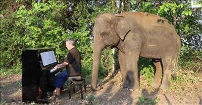 Paul Barton Plays Piano For Retired Elephants At Elephants World