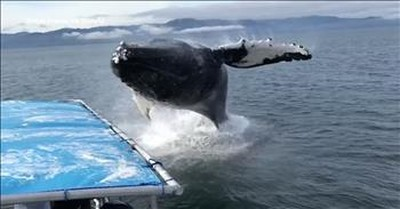 Humpback Whale Suprises Whale Watchers During Incredible Close Encounter