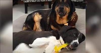 Puppy Brings Life To Senior Dogs Retirement Home