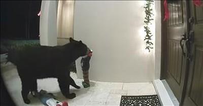 Bear Caught On Video Ringing Doorbell