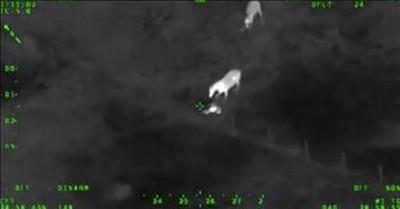 Horses Help Police Capture Fleeing Suspect