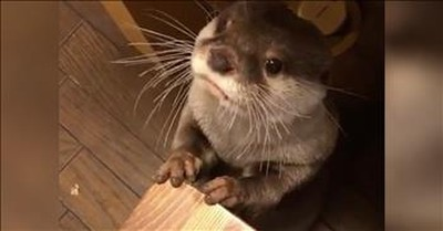 Adorable Otter Makes Sounds While It Eats