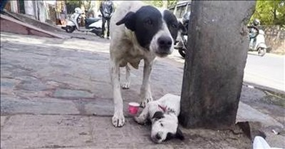 Mother Dog Cries Over Wounded Puppy
