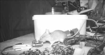 Retiree Uses Hidden Camera To Record Mouse Secretly Cleaning His Shed