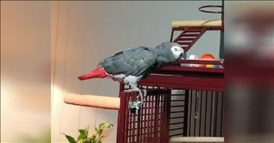 Funny Parrot Stops Alexa Every Time Frank Sinatra Plays