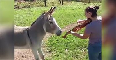 Owner Plays The Violin For A Donkey And He's Mesmerized