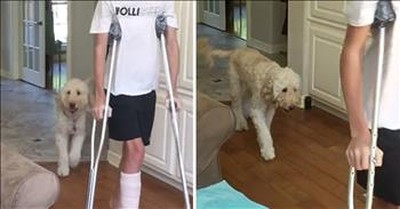Funny Dog Mimics Teen Walking With Broken Leg