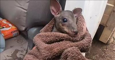 Farmer Saves Baby Kangaroo From Australia Fires