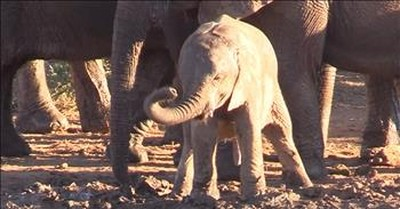 Baby Elephant Discovers His Trunk For The First Time