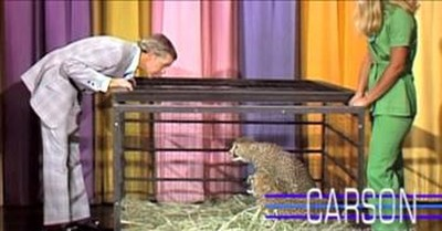 Cheetah Frightens Johnny Carson Right Into The Arms Of Ed McMahon