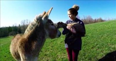 Baby Goat And Donkey Are Adorable Best Friends