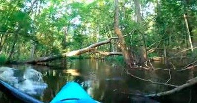 Kayaker Escapes Close Call With Charging Alligator