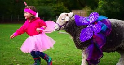 3-Year-Old And Sheep Are The Best Of Friends