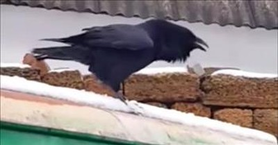 Bird On A Rooftop Sounds Just Like A Barking Dog