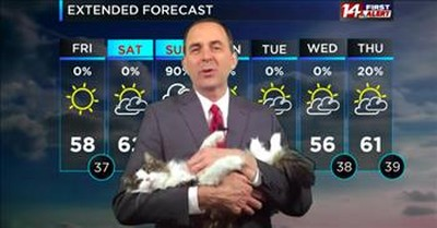 Betty The Weather Cat Steals The Show As Weatherman Works From Home