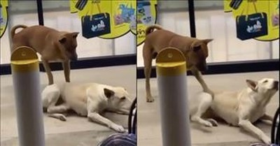 Dog Gives Back Scratches to His Doggie Friend