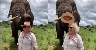Cheeky Elephant Takes Hat Off Unsuspecting Tourist