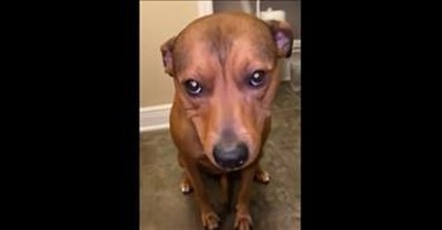Guilty Dog Hides Blueberries In His Mouth
