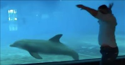 Dolphin Performs Synchronized Gymnastics Moves With Man Visiting Aquarium