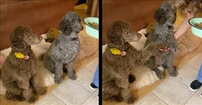 2 Dogs Pray With Owner Before Meal
