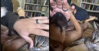 Jealous Dog Won't Let Owner Pet The Cat
