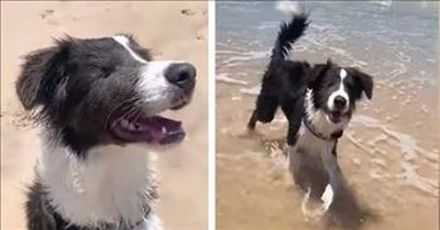 Blind Dog Visits The Beach For The Very First Time