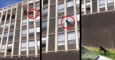 Cat Jumps From 5th Floor Window And Walks Away Unharmed