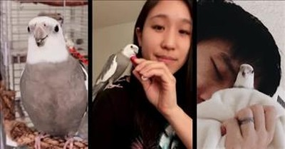 Cockatiel Loves To Sing Duets With His Humans
