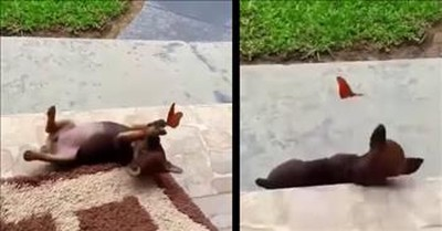 A Puppy Playing With A Butterfly Is The Best Thing You'll See Today
