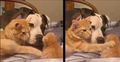 Momma Cat Introduces 1-Week-Old Kitten To The Dog