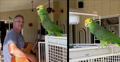 Bird Sings Along With Owner During Guitar Duet