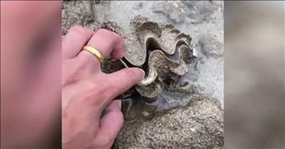 Curious Man Touches A Clam Shell And Gets Unexpected Surprise