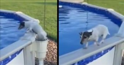 Little Dog Has A Funny Way Of Getting Out The Pool