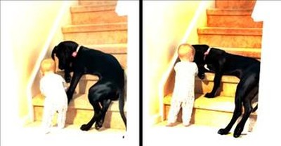 Protective Dog Saves Baby From Climbing The Steps