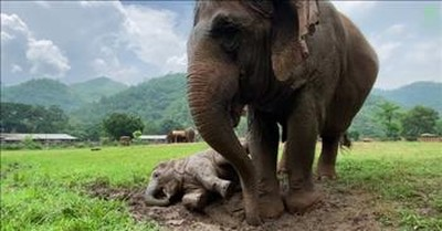 Baby Elephant Enjoys Her First Time In The Rain