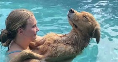 Relaxed Dog Falls Asleep In The Pool